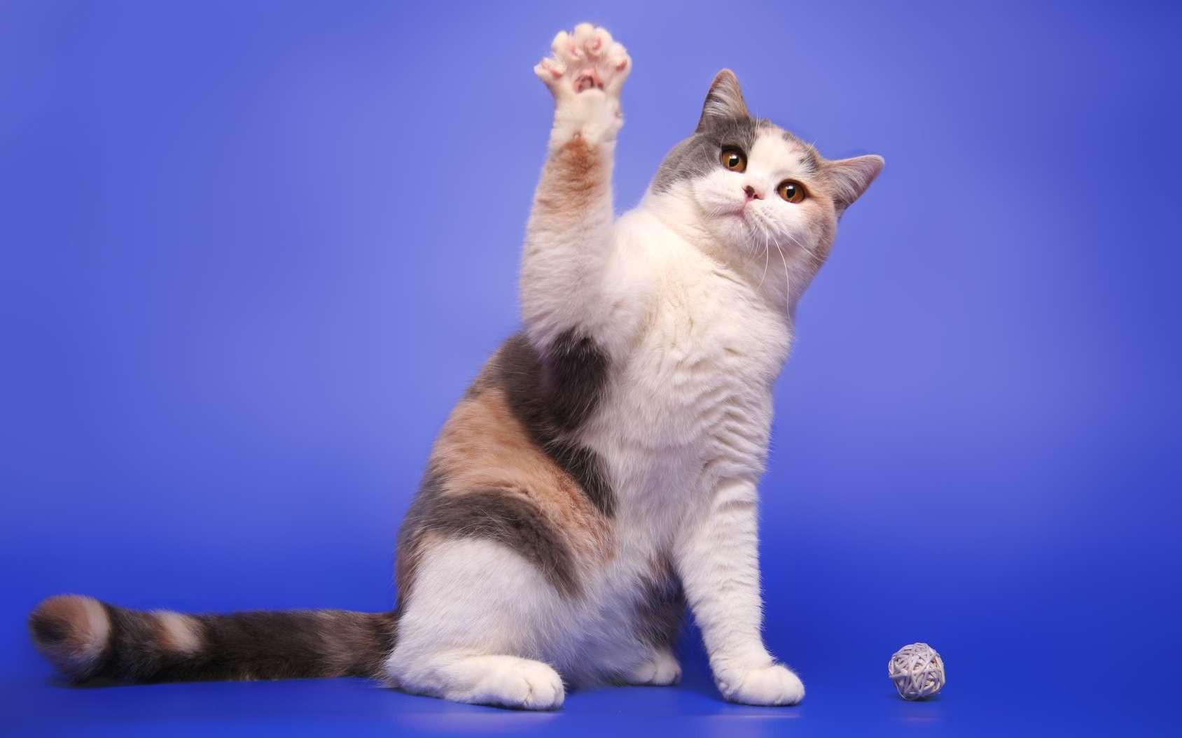 Nos amis les chats !