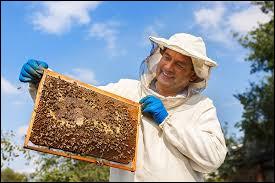 Comment s'appelle la personne qui récolte le miel ?