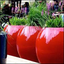 Dans quels types de pots peuvent être les orchidées ?