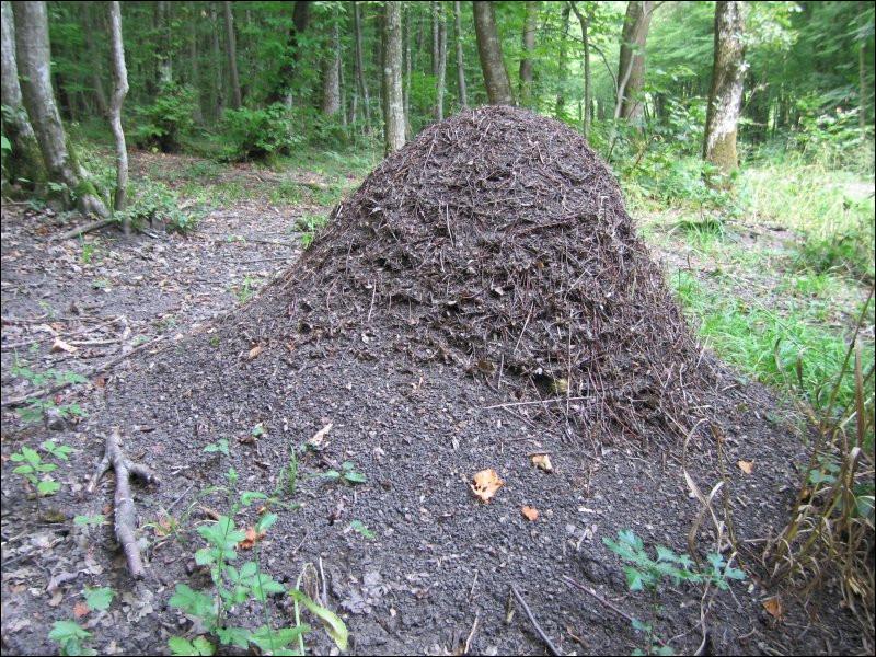 Comment s'appelle la maison des fourmis ?
