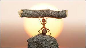 Combien de fois une fourmi peut-elle porter son poids ?