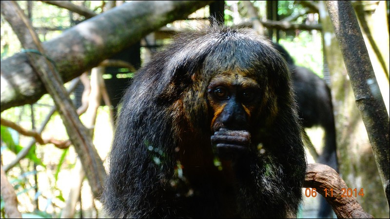 Identifiez le bon singe !