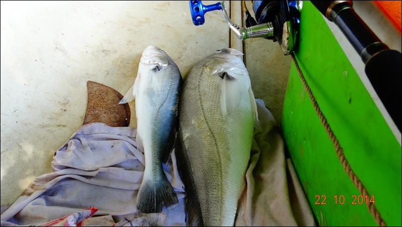 En Guyane, ces poissons d'eau douce sont très recherchés, pour leur qualité gustative !