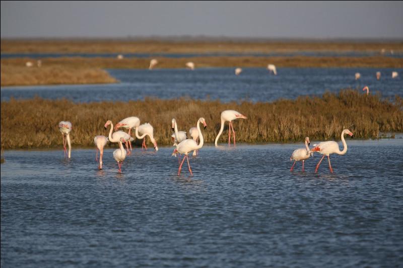 Et enfin, paysage camarguais pour ce magnifique étang !