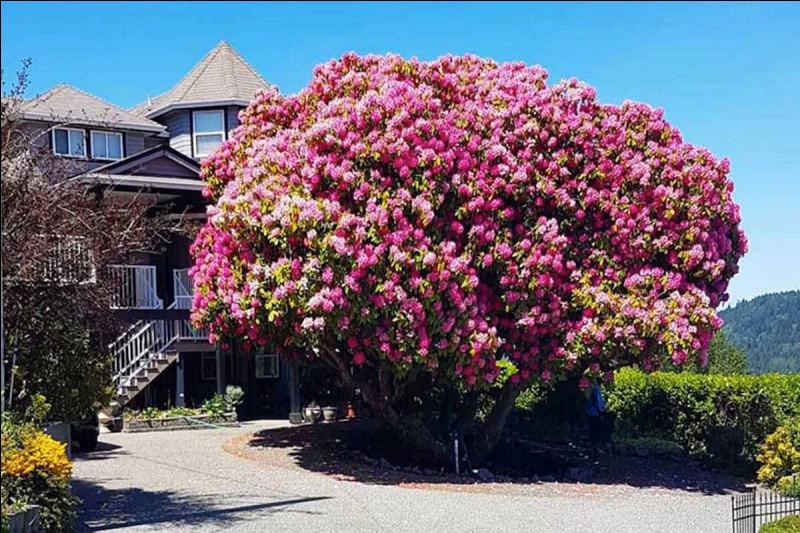 """Qui chantait """"J'aime pas les rhododendrons"""" ?"""