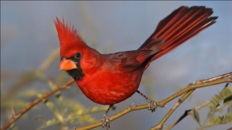 Quel cardinal fut le principal ministre du roi de 1624 à 1642 ?