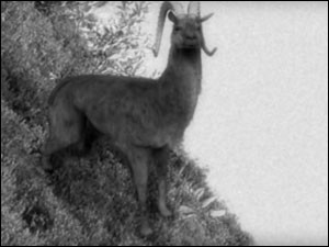 Combien y a-t-il de versions de la chasse au dahu ?