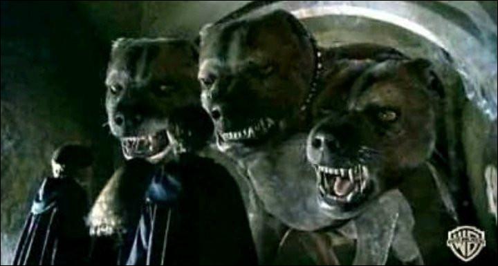Comment s'appelle le chien à trois têtes d'Hagrid ?