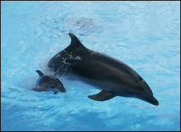 Quelle couleur n'existe pas chez les dauphins ?