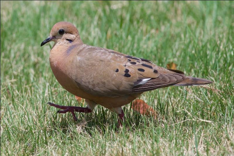 Oiseaux de Martinique