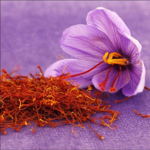 Le safran est l'épice la plus chère au monde. Environ 30 euros le gramme, ou encore 30 000 euros le kilo. Il s'agit de la seule épice issue d'une fleur, le Crocus sativus. Il est également surnommé l'or rouge.Mais quel est le plus grand producteur de safran au monde ?