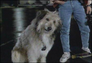 En 1985, le chien de Doc se nommait Einstein. Le samedi 12 novembre 1955, l'ancien chien de Doc se nommait
