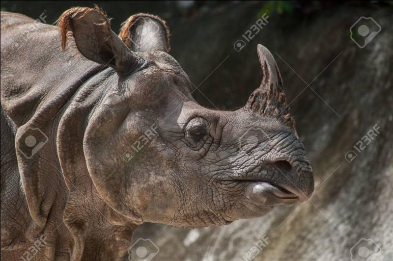 Dans quel milieu environnemental vivent les rhinocéros ?(Plusieurs réponses possibles).