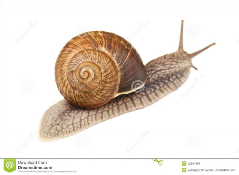 Quelle distance parcourt en général un escargot en une heure ?