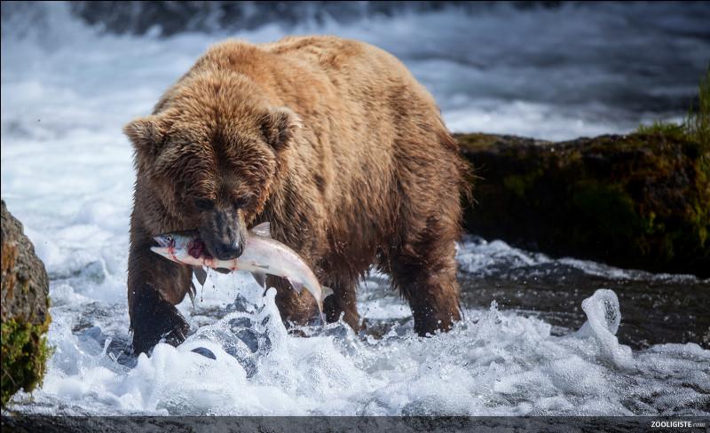 Combien de kilogrammes pèse un grizzli ?