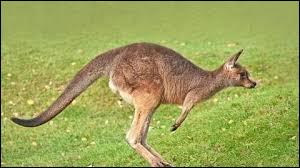 A quel sport correspond le mieux le kangourou ?