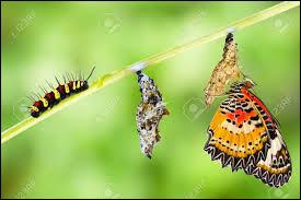 Une chenille qui se transforme en papillon a subi une...