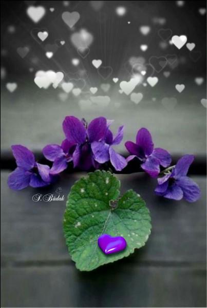 Pour lequel de ses grands chanteurs des années 40, l'amour était-il un bouquet de violettes ?