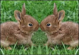 Pas touche à mon petit .... dit la maman lapine !