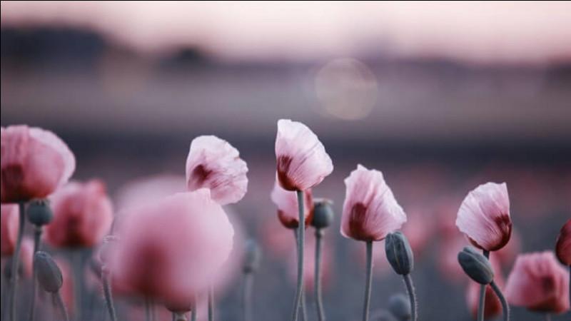 """A qui doit-on la chanson """"Le Pouvoir des fleurs"""" en 1992?"""