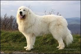 Quel est le nom de cette race de chien très ancienne ?