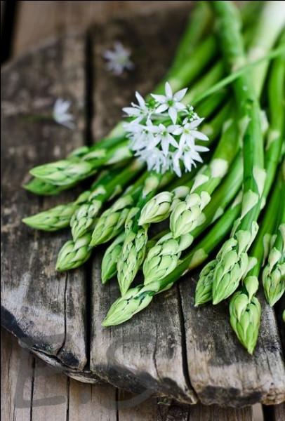 Quelle appellation est donnée à une sauce ou un potage dont ce légume est la base ?