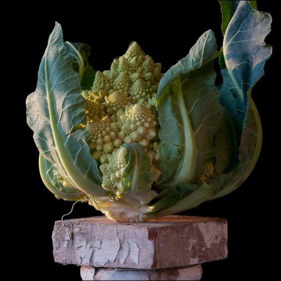 Quel est ce légume semblable à une œuvre d'art ?