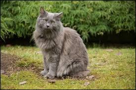 Époustouflant ! J'adore ce chat. Quelle est sa race ?