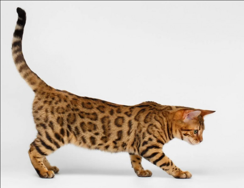 Waouh ! Comment s'appelle ce chat ?