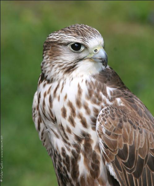 Ce bel oiseau à un nom. Lequel ?