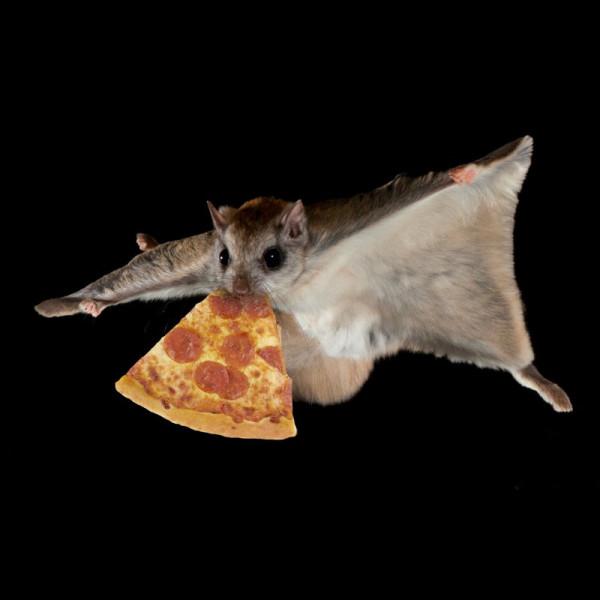 Quelle distance un écureuil volant peut-il parcourir en planant ?