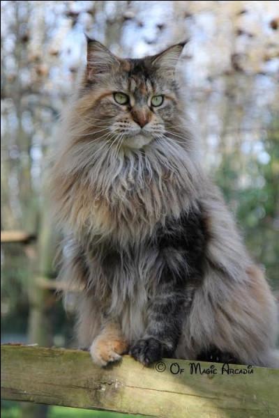 Ma parole, ces chats sont tous incroyables ! Celui-ci aussi, il est...