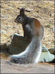 Comment se nomme cette espèce ?