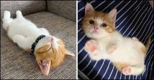 Tu ....... si adorable !