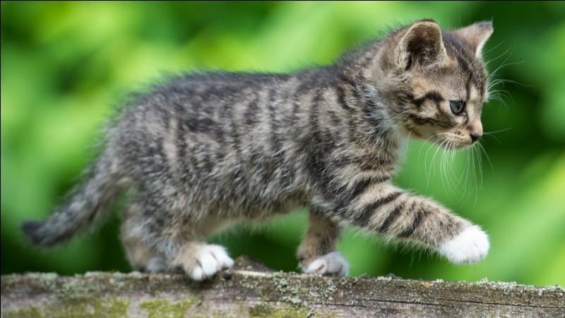 Si vous assistez à la naissance d'un chaton et que vous restez avec lui les dix prochaines minutes, il vous prendra pour sa maman.
