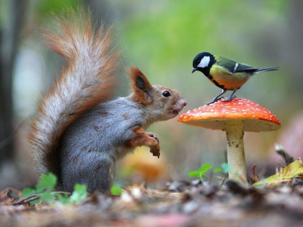 Les animaux, vrai ou faux (2)