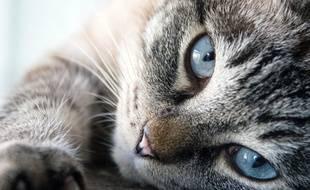 Connais-tu bien les chats ?