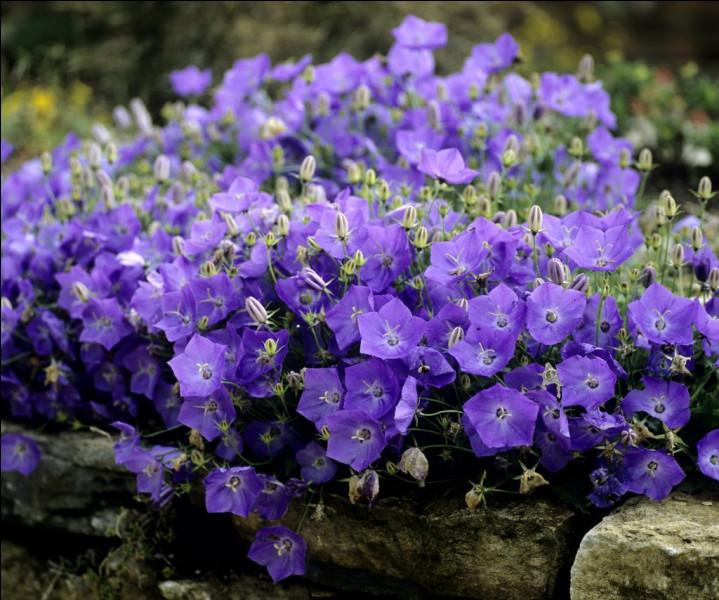 Quelles fleurs apercevons-nous ici ?