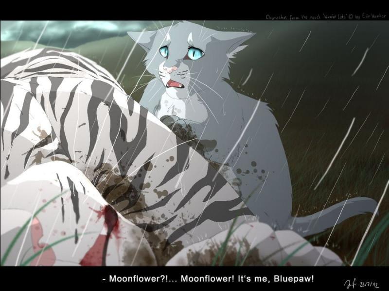 Après la bataille contre ce clan, qui, dans la famille de Nuage Bleu et Nuage de Neige, meurt ?