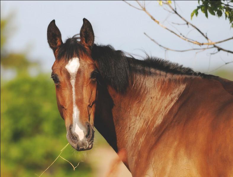 "Comment dit-on ""cheval"" en anglais ?"