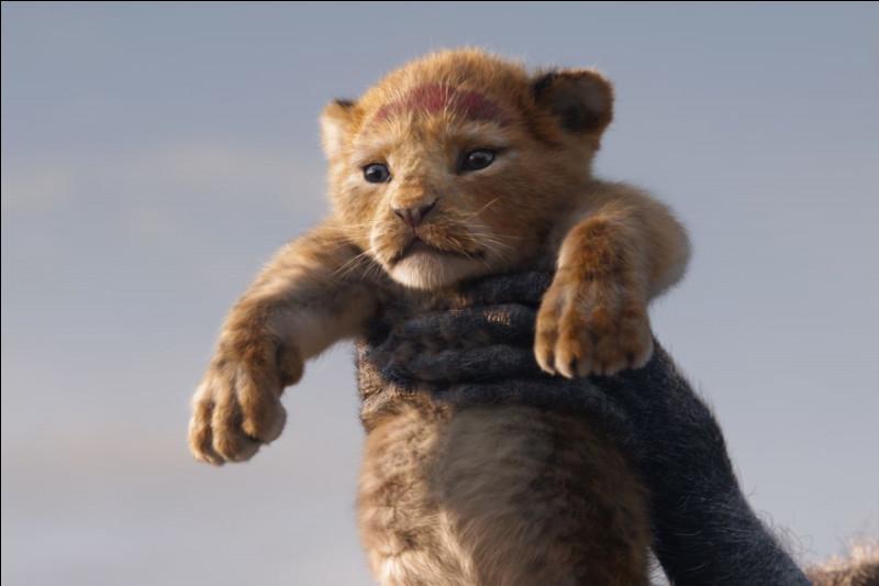 À partir de quel âge le lionceau a la crinière qui pousse ?