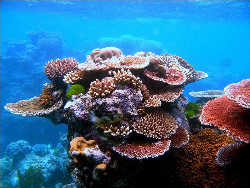 Quelle est la taille de la barrière de corail d'Australie ?