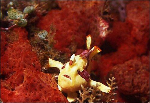 Quel est le poisson dont la couleur de la peau s'adapte à celle des algues ?