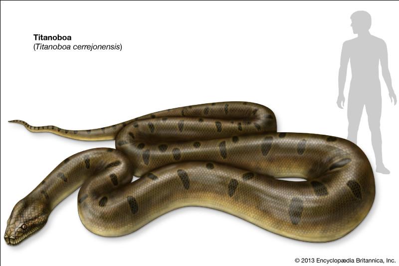 Le titanoboa est encore vivant / son extinction n'a pas été prouvée :
