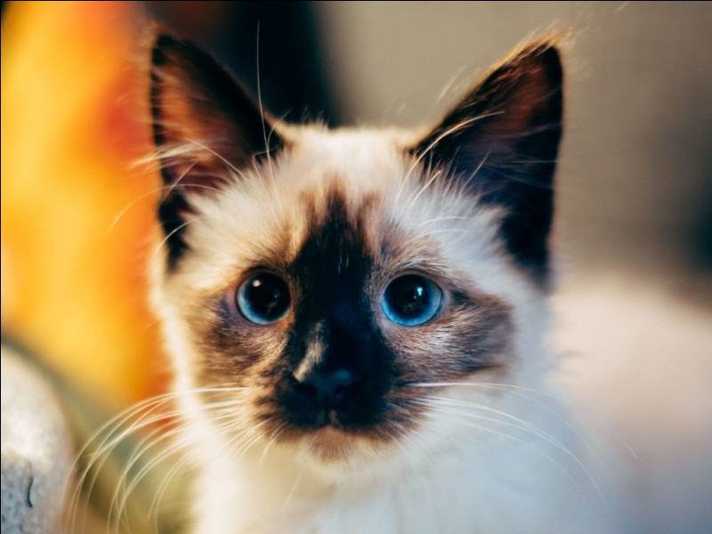 """""""Les Vieux chats"""" est un film mis en scène par Sebastian Silva."""