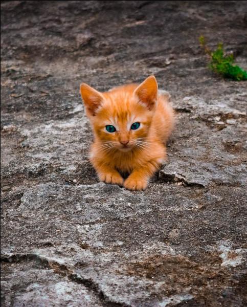 """""""Ma vie de chat"""" est le titre d'un long-métrage joué par Kevin Bacon."""