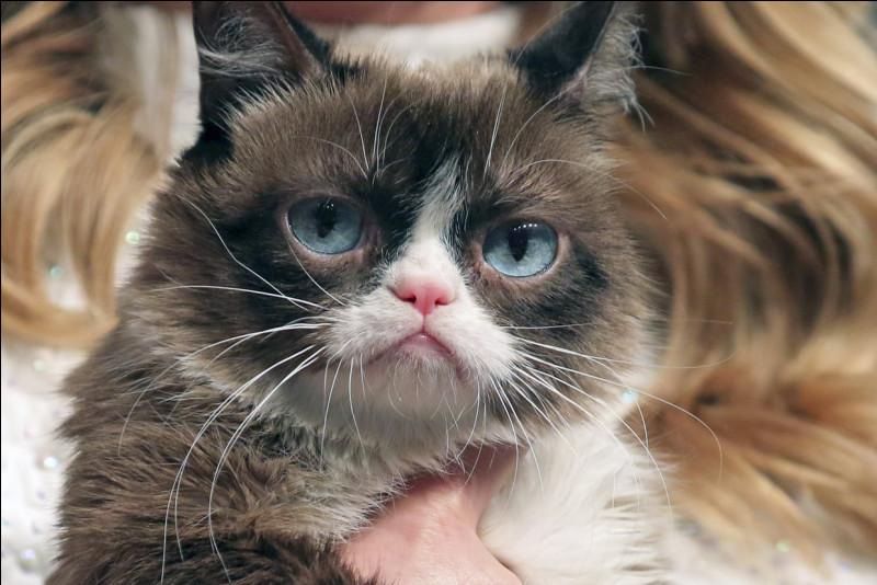 """""""Chacun cherche son chat"""" est un film dans lequel joue Romain Duris."""
