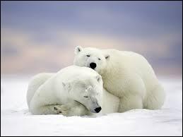 L'Union internationale pour la conservation de la nature UICN estime la population d'ours blancs à environ _____ individus.