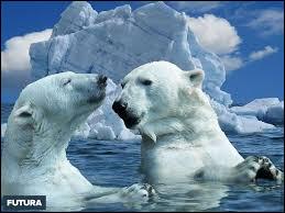 L'espèce est classée comme vulnérable (VU), principalement en raison du réchauffement climatique et du bouleversement de son habitat.