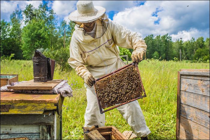 Par quel mot désigne-t-on l'élevage des abeilles ?